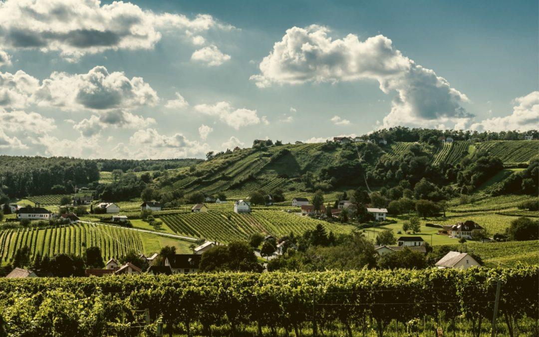 Bernstein Trail – Wein und Wandern