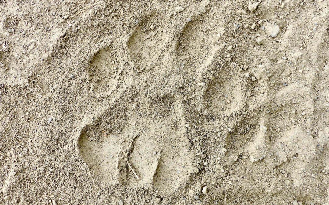 Live aus dem Himalaya (6): Ein Ausblick: Der Snow Leopard Trail