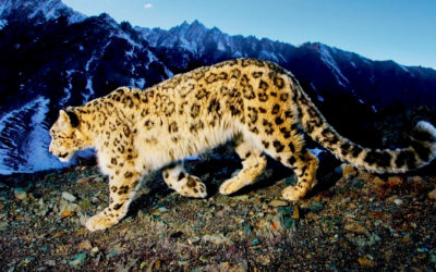 Snow Leopard Trail Der 1. Fair Trail im Himalaya